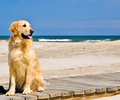 Dog Friendly Beach Holidays