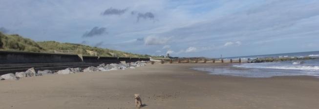 Eccles Beach Dog Friendly