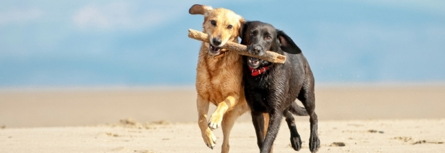 Dog and Pet Friendly Cottages in Brixham